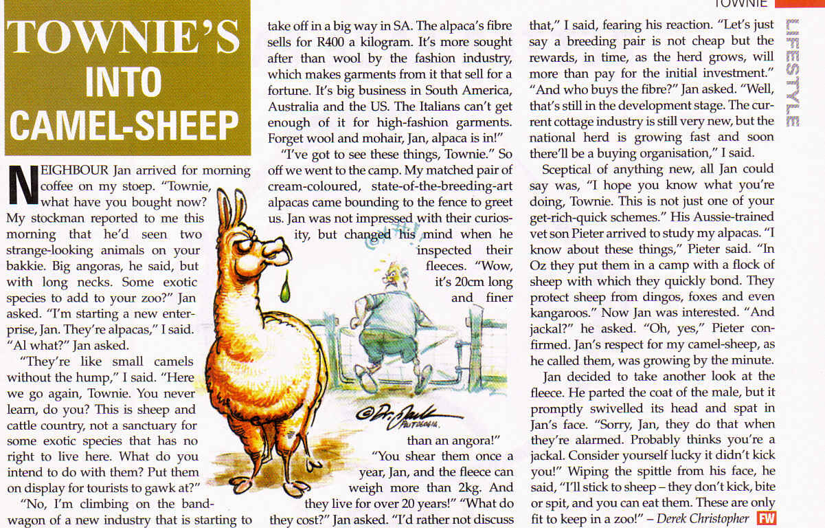 Farmer's Weekly: Townie's into camel-sheep